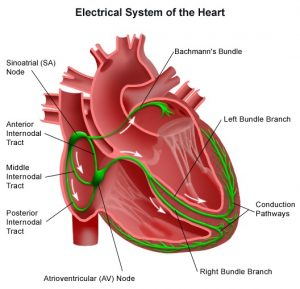 Electrical System of the Heart - Dr. Lim Ing  Haan Cardiology Clinic